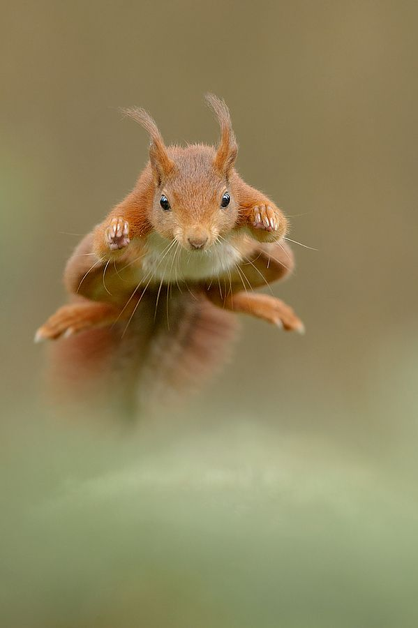 500px / The New Superman!!!! by Edwin Kats
